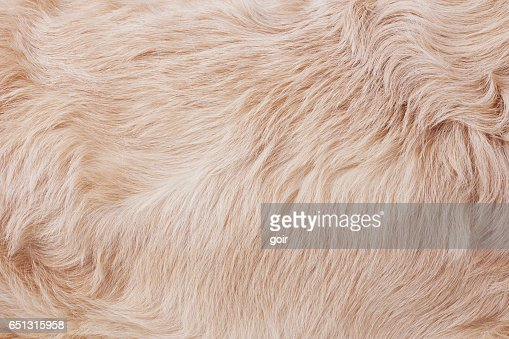 Fur background : Stock Photo