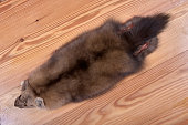 Fur skins of Siberian sable on wooden background. Raw material of beautiful dark chestnut color