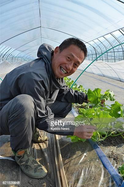 Furano Japan Yoshinori Yamakawa a former member of Japan's Antarctic expedition team takes care of melons on May 8 2013 in Furano Hokkaido Yamakawa...
