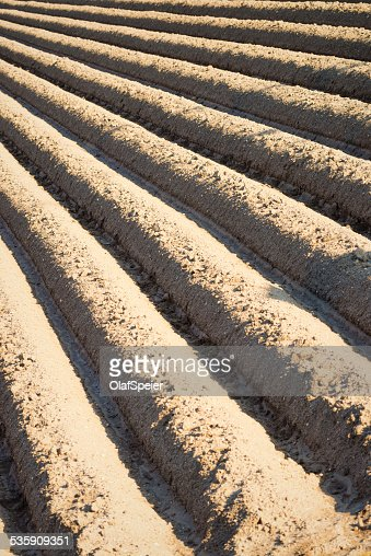 Furrows : Stock Photo