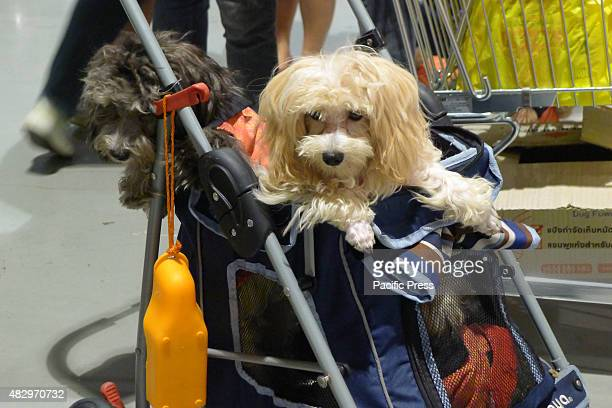 A furry breed of dog in a grocery cart catches the attention of the spectators at the trade fair Different breeds of dogs and cats Dog breeders Pet...