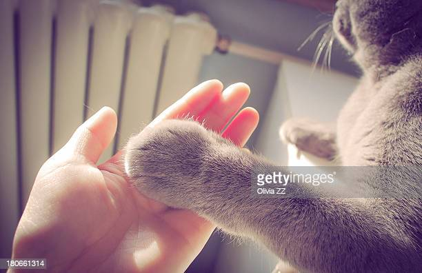 Furry cat paw