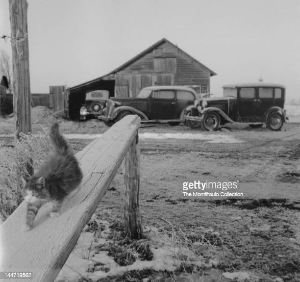 Furry cat walking across a wooden beam on a snowy patch of ground with three motorcars parked by a wooden building in the background America 1930s