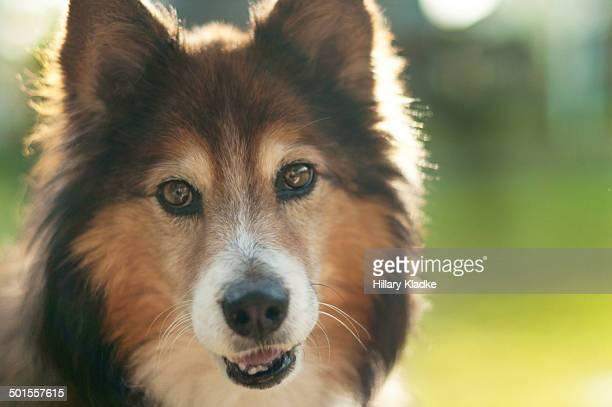 Furry dog posing