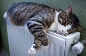 Furry striped pet cat lying on warm radiator rests and relaxes
