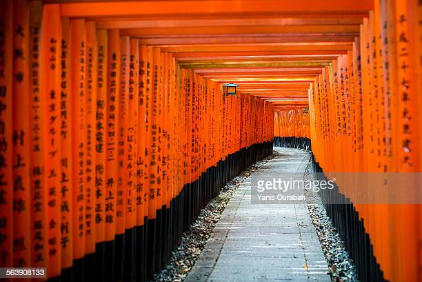 Fushimi Inari shinto shrine, Kyoto, path of torii