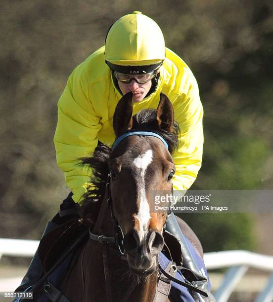 Gabrial's Kaka ridden by Barry McHugh during the stable visit to Mews House Stables Malton