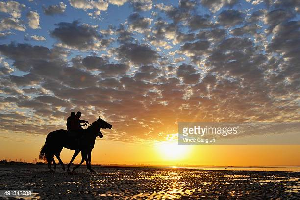 Gai Waterhouse trained horses walk through the shallow waters during a trackwork session at Altona Beach on October 5 2015 in Melbourne Australia