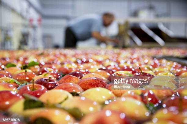 Gala apples move through a water conveyor as they are sorted at the Rasch Family Orchards packing facility in Grand Rapids Michigan US on Monday Sept...