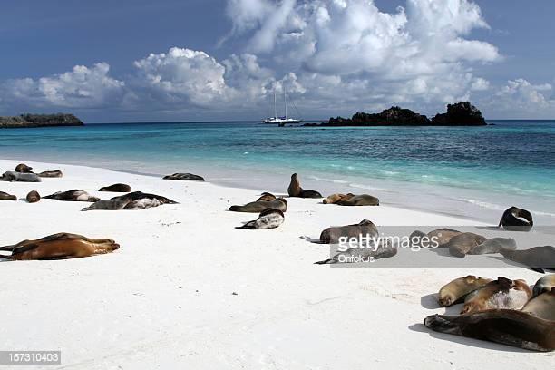 ガラパゴスシーライオンビーチでの日光浴やガラパゴス諸島、エクアドル