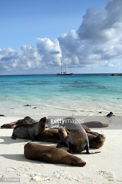 Galapagos Sea Lions Basking on Beach