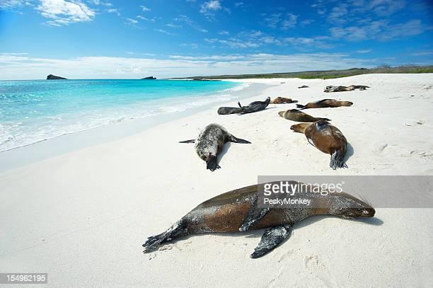 ガラパゴスシーライオンて明るい太陽のビーチ