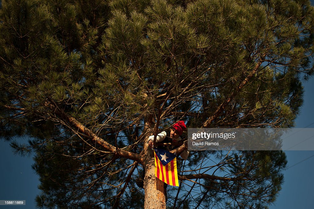 A 'Galejador' takes down a Catalonian pro-independence flag from the selected pine tree during 'La Festa del Pi' (The Festival of the Pine) in the village of Centelles on December 30, 2012 in Barcelona, Spain. Early in the morning men and women born in Centelles, who are named 'Galejadors' wear their traditional costume with the Catalan red hat known as 'Barretina' and carry their shooting muskets as they walk into the forest to chop down a pine tree, load it on an ox cart and take it to the church in the village. There the pine tree is decorated with five bouquets of apples and wafers and hung inside a church until January 6. The tradition has been documented since 1751 and it is believed its origins are related to the trees and the pagan worship of fertilization related the winter solstice.