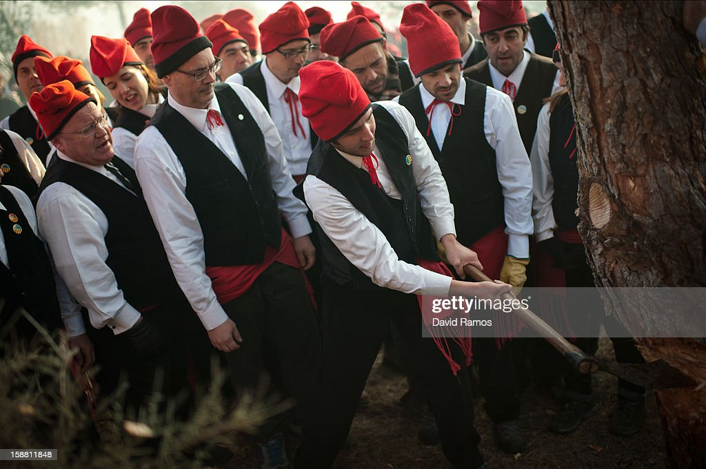'Galejadors' chop down the selected pine tree during 'La Festa del Pi' (The Festival of the Pine) in the village of Centelles on December 30, 2012 in Barcelona, Spain. Early in the morning men and women born in Centelles, who are named 'Galejadors' wear their traditional costume with the Catalan red hat known as 'Barretina' and carry their shooting muskets as they walk into the forest to chop down a pine tree, load it on an ox cart and take it to the church in the village. There the pine tree is decorated with five bouquets of apples and wafers and hung inside a church until January 6. The tradition has been documented since 1751 and it is believed its origins are related to the trees and the pagan worship of fertilization related the winter solstice.