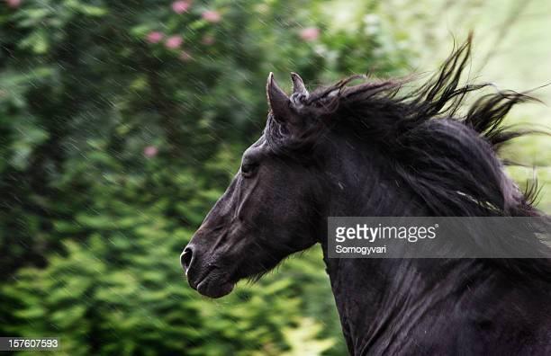 Gallop in the summer rain