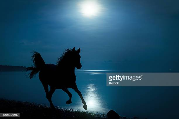 galloping horse in moonlight on beach