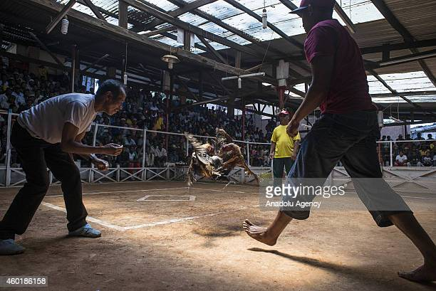Gamecocks fight at a cockpit as their owners and the public make bets in Antananarivo Madagascar on December 06 2014 Cockfight is a blood sport...