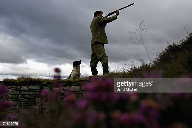 Gamekeeper Andrew Drummond walks with his springer spaniel on Drumochter Moore on the Milton Estate on August 11 2006 Dalwhinnie in ScotlandThe Game...