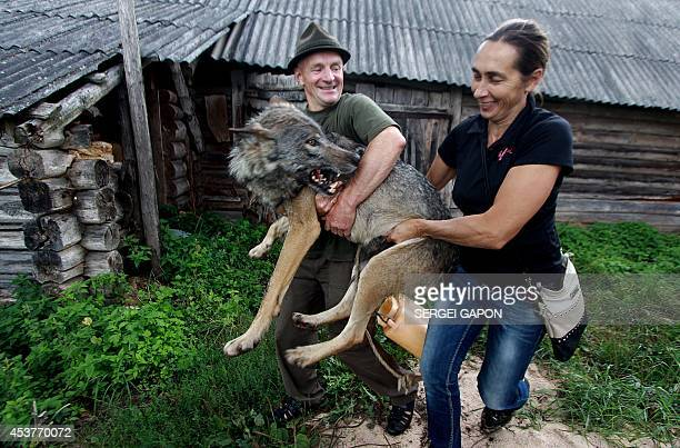 A gamekeeper Oleg Selekh and his wife Yelena carry a tame wolf in front of their house in the village of Zacherevye some 250 kms north from Minsk on...