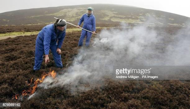 Gamekeeper Roy McGuffie looks on at heather burning demonstration by fellow gamekeeper Sean Middleton from the Heather Trust Heather burning is a...