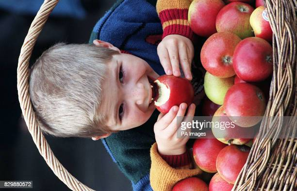Gaptoothed Joshua Smith from Chelmsford Essex gets his teeth into one of the new Red Pippin apples the first homegrown dessert apple to be launched...