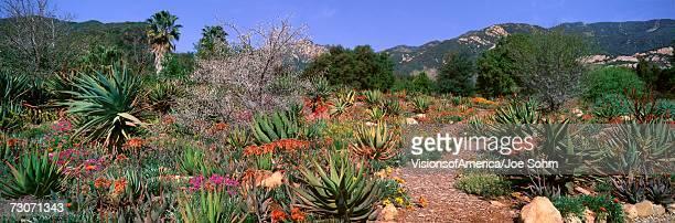 'Garden At Center for Earth Concerns, Ojai, California'