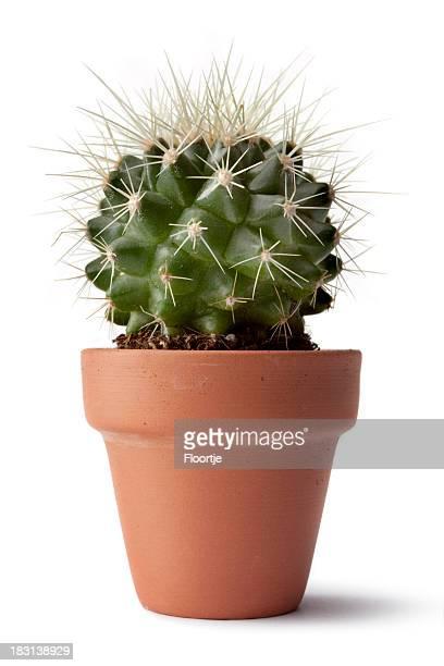 Jardin: Cactus
