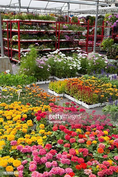 Garden Center und Gartenbau-Betrieb mit Blumen im Frühling Garten