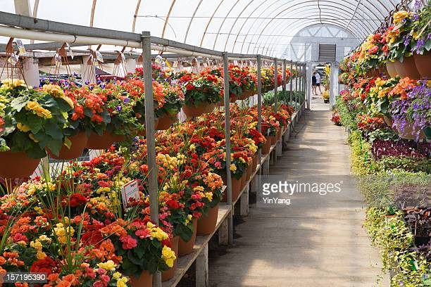 Garden Center Greenhouse of Summer Retail Flower Shop, Plant Store