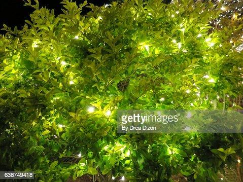 Garden Christmas Lights