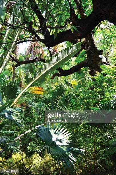 Garden decor like tropical rain forest pattern