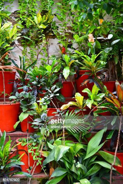 Garden decor with beautiful plants