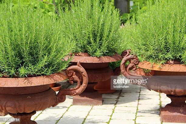 Garden desgin with flowerpots and rosemary