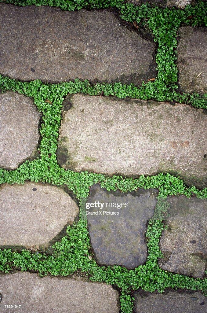 garden design paving : Stock Photo