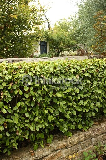 Clôture De Jardin Muret De Pierres Laurier Stock Photo | Thinkstock