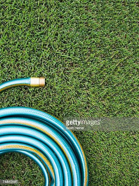 Garden hose on a green lawn.