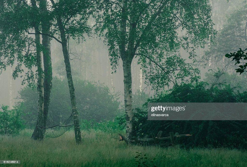 Garden in fog : Stock Photo
