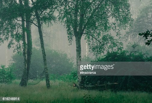 Garden in fog : Foto de stock
