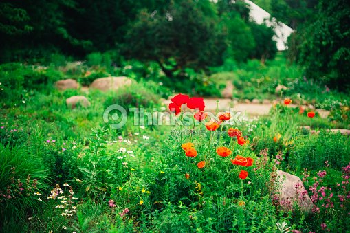 Jardin Paysager Lit Couvert De Fleurs Les Arbres Et Les ...