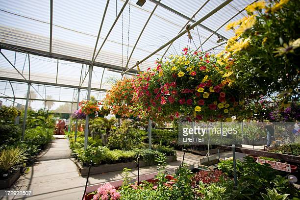 Plant Nursery Stock Photos and Pictures Getty Images