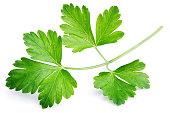 Garden parsley herb (coriander) leaf isolated on white background