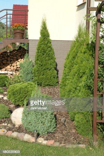 Den Garten : Stock-Foto