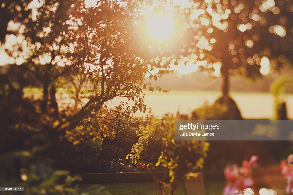 Garden scene at sunset