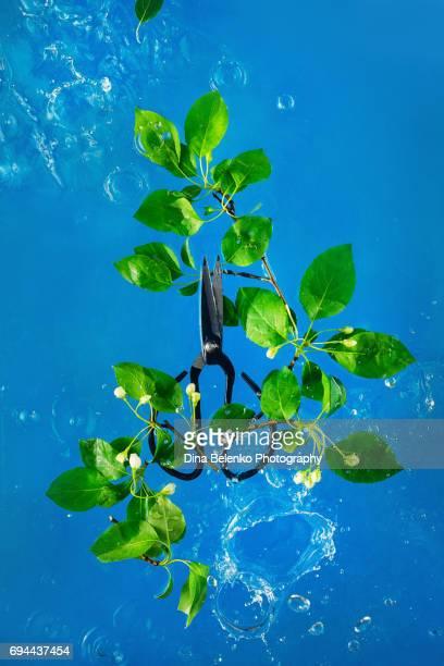 Garden scissors and spring leaves in water splash