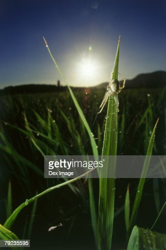 Garden spider on web at sunrise, close up : Stock Photo