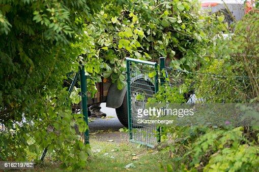Garden waste : Stockfoto