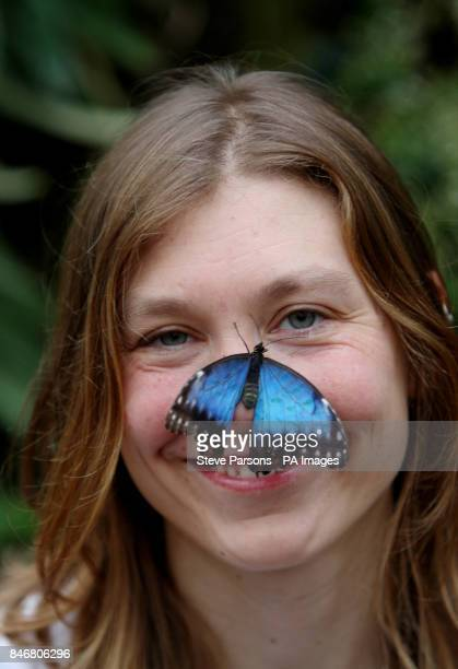 RHS Garden Wisley employee Cara Smith poses with a Blue Morpho butterfly in their Glasshouse at the gardens in Woking Surrey