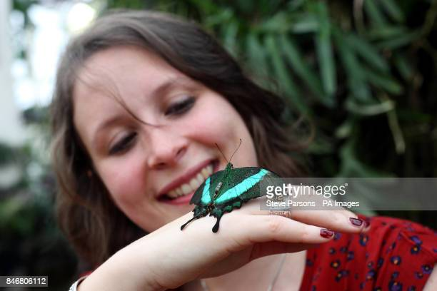 RHS Garden Wisley employee Samantha Bevington poses with a Emerald Swallowtail butterfly in their Glasshouse at the gardens in Woking Surrey