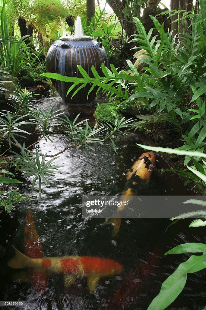 garden with kois pond : Stock Photo