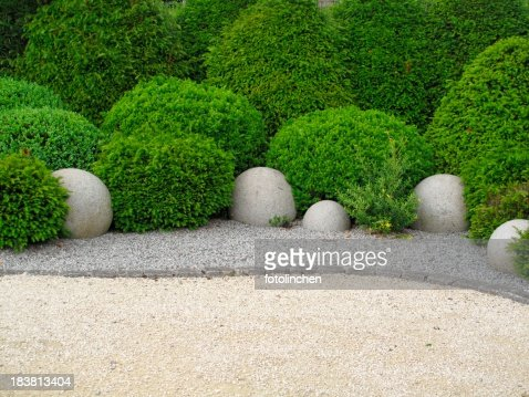 Garden with shrubs on a soil of stone